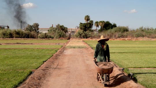 José García Núñez works on his family's grass farm next to the Industrias Zahori factory in Mexicali on Sept. 20, 2018.