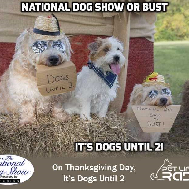 Pensacola dog trainer wins National Dog Show meme contest with adorable staged photo