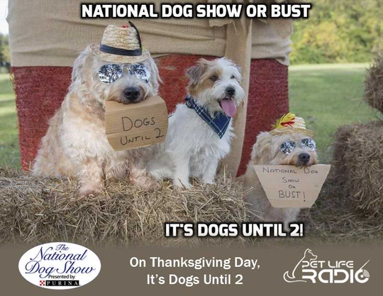 "Pensacola dog trainer Kelli Whitfield and her three dogs, Griffin (far left), Cooper and Winston, won the Pet Life Radio/National Dog Show ""Dogs Until 2 Meme Contest"" with this staged photo."