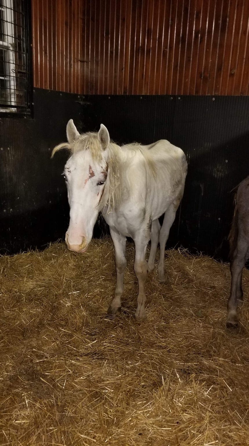 Vet claims horses were neglected at Lebanon County farm