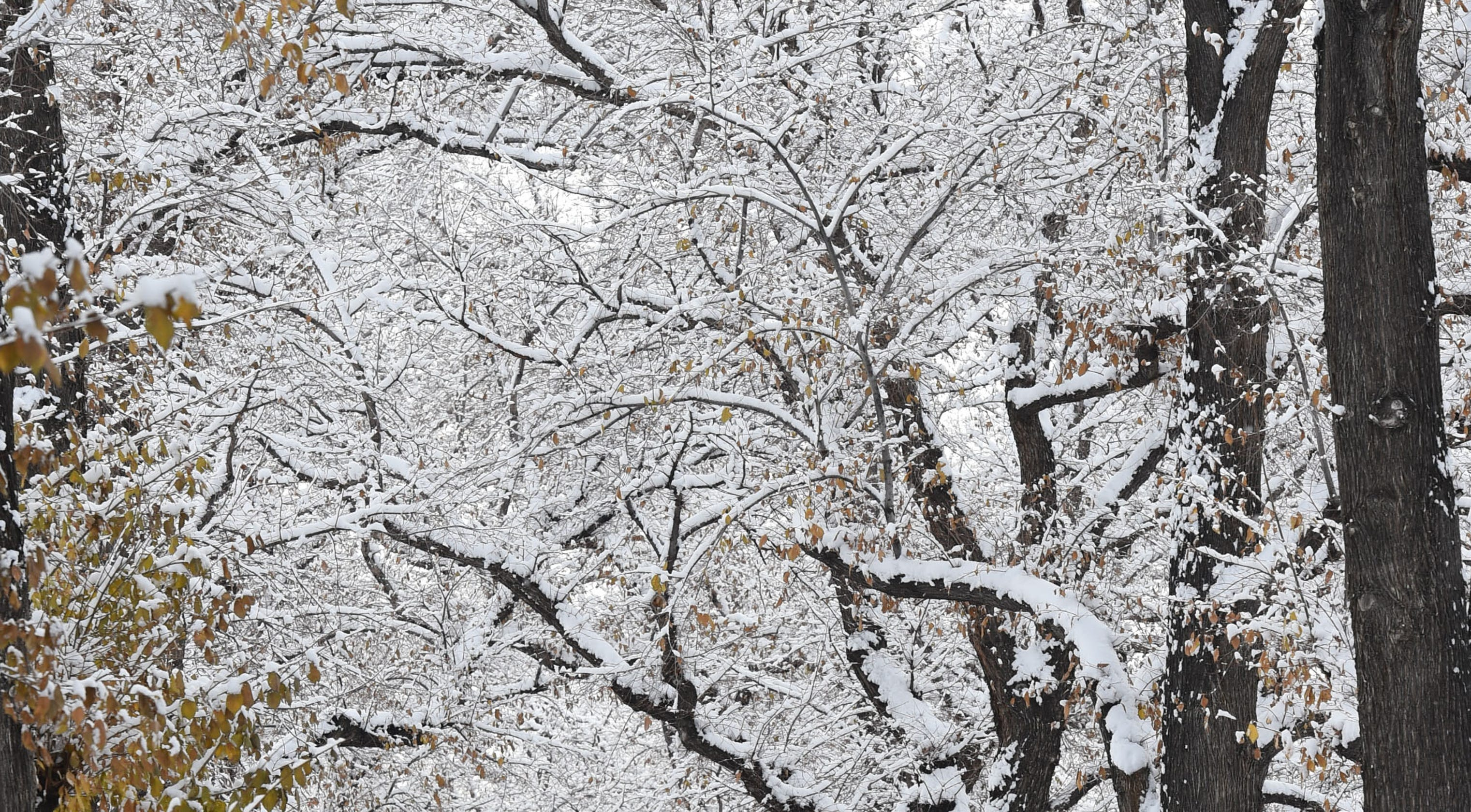 Forecaster: There's a 'decent chance' for a white Christmas