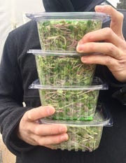 Brian Carlstrom grows several microgreens, including radish, sunflower, broccoli and peashoots.