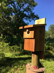 Give the gift of a hands-on experience with DIY Bluebird birdhouse kits.