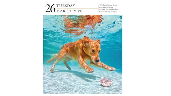 Dog-a-day calendar