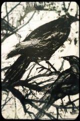 Three crows by Sharon Eley.
