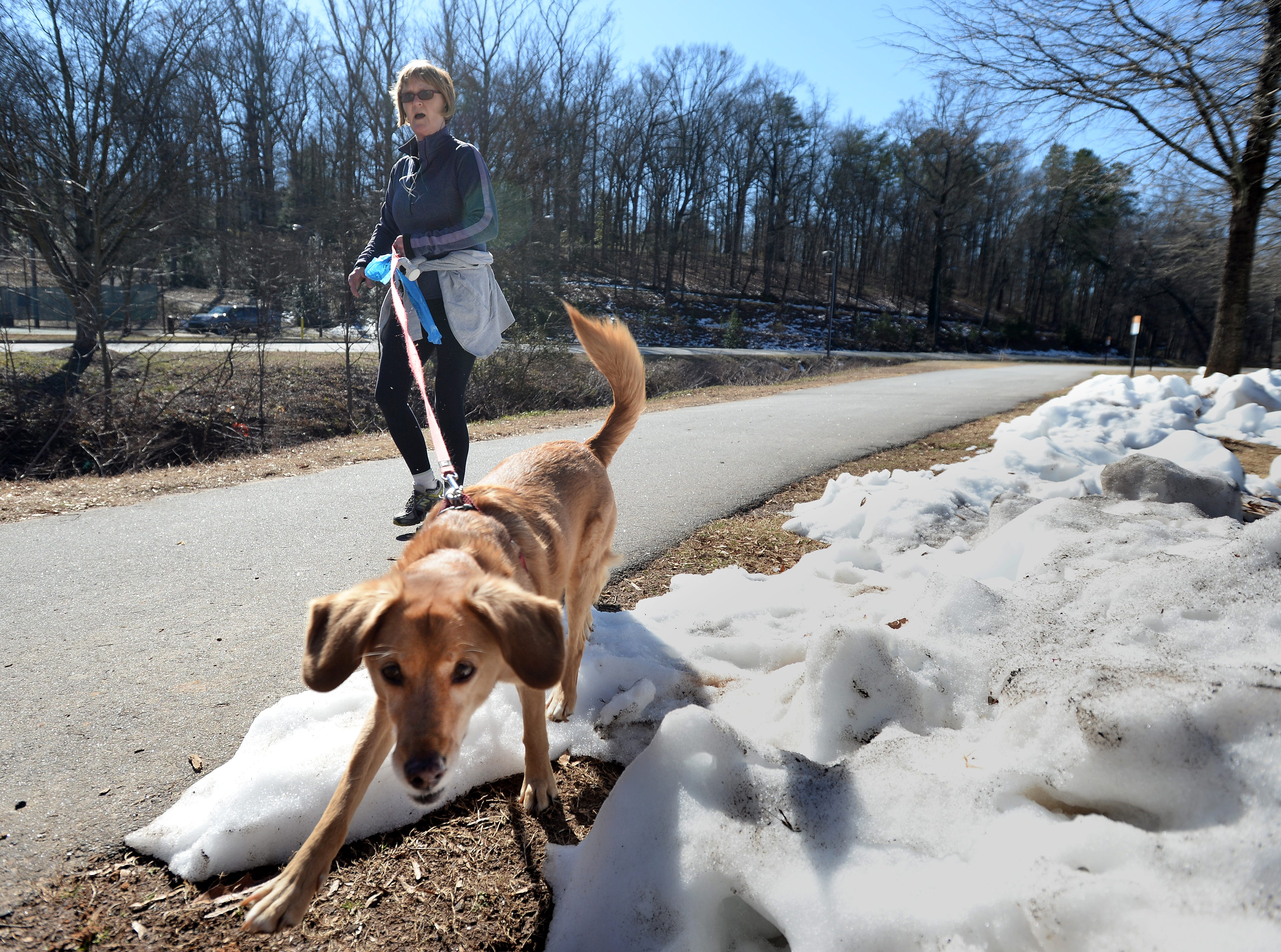 Marcia Cowen walks her dog Lilley past the last remnants of snow in Cleveland Park in Greenville Sunday, February 16, 2014. Temperatures were expected to reach the mid 50s Sunday afternoon.