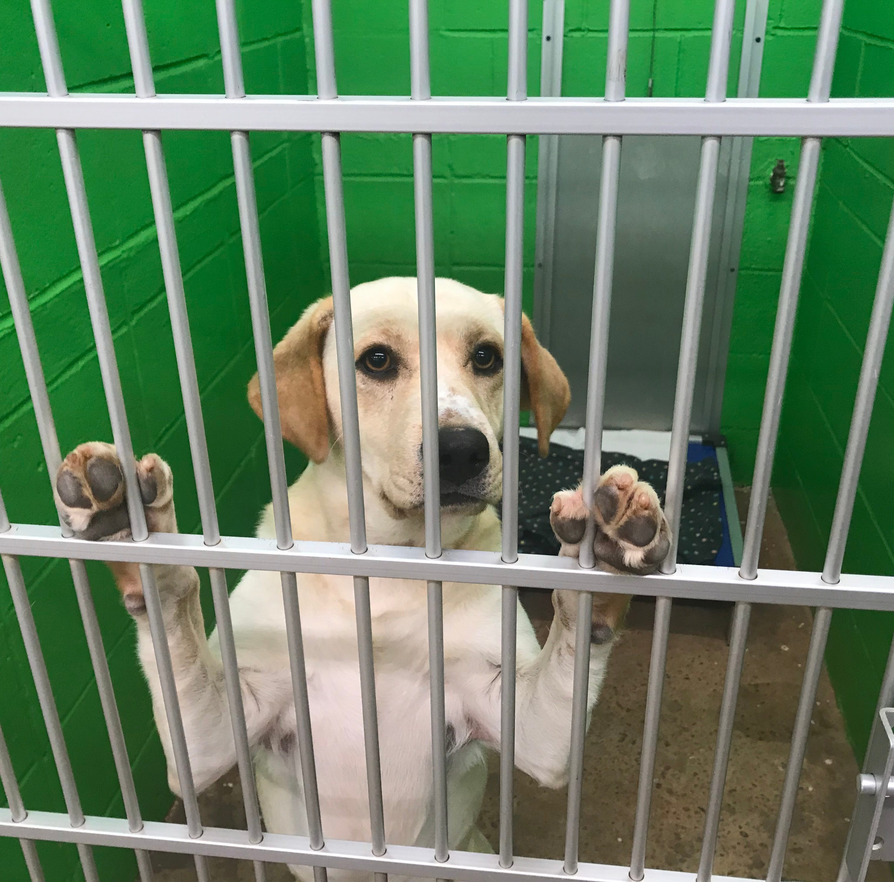 Ron Barnett sponsors pup to help Pickens Humane Society stay open, but it's not enough