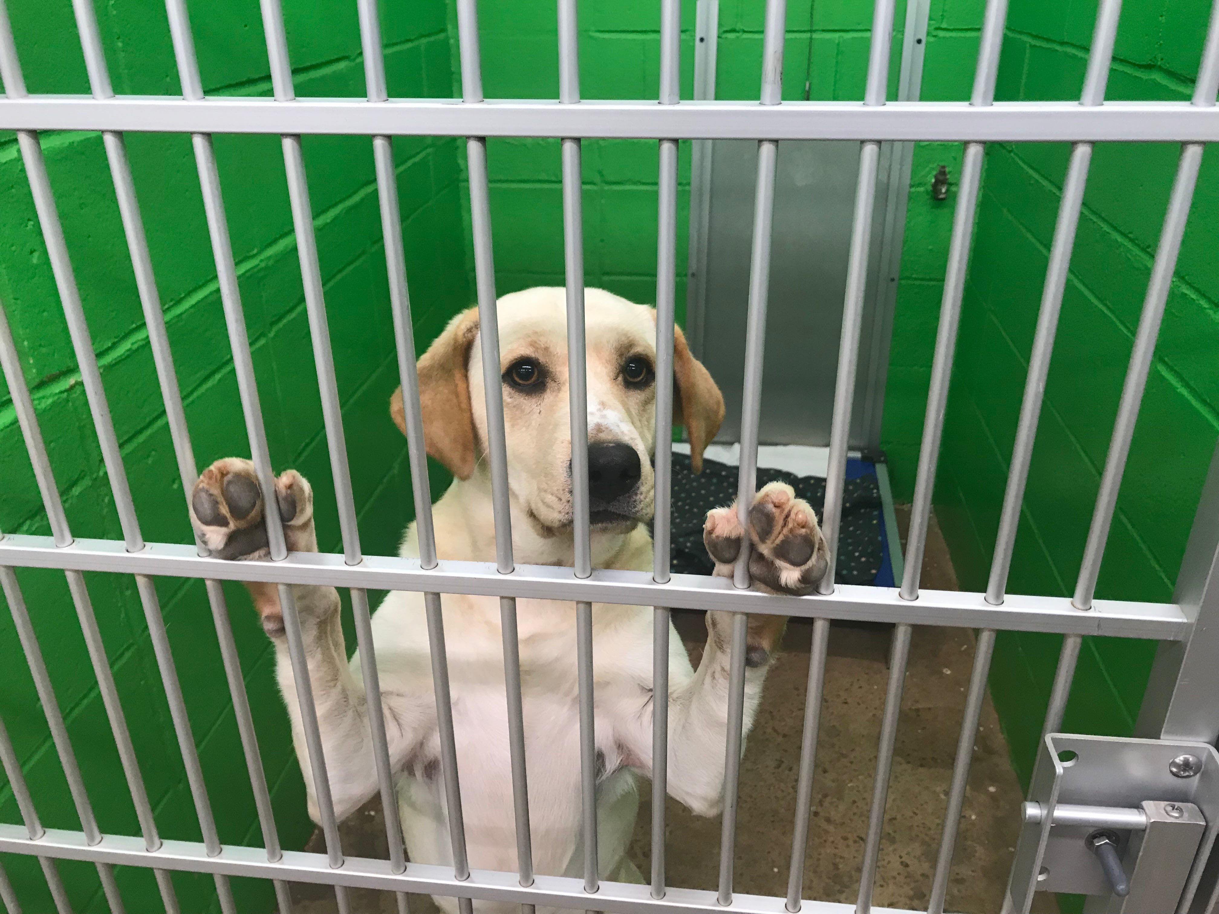 Image of: Golden Valley Buy Photo Pickens Humane Society To Close Without Another christmas Miracle