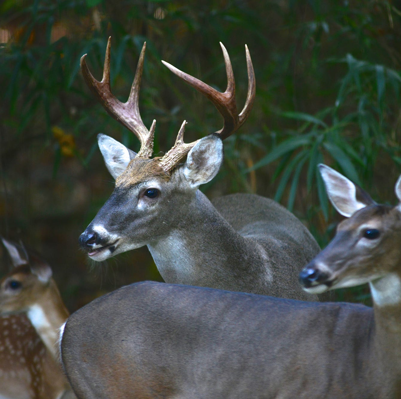 Here's a quick look at the unique plan for Phil Bryant Wildlife Management Area located in Warren and Issaquena counties.