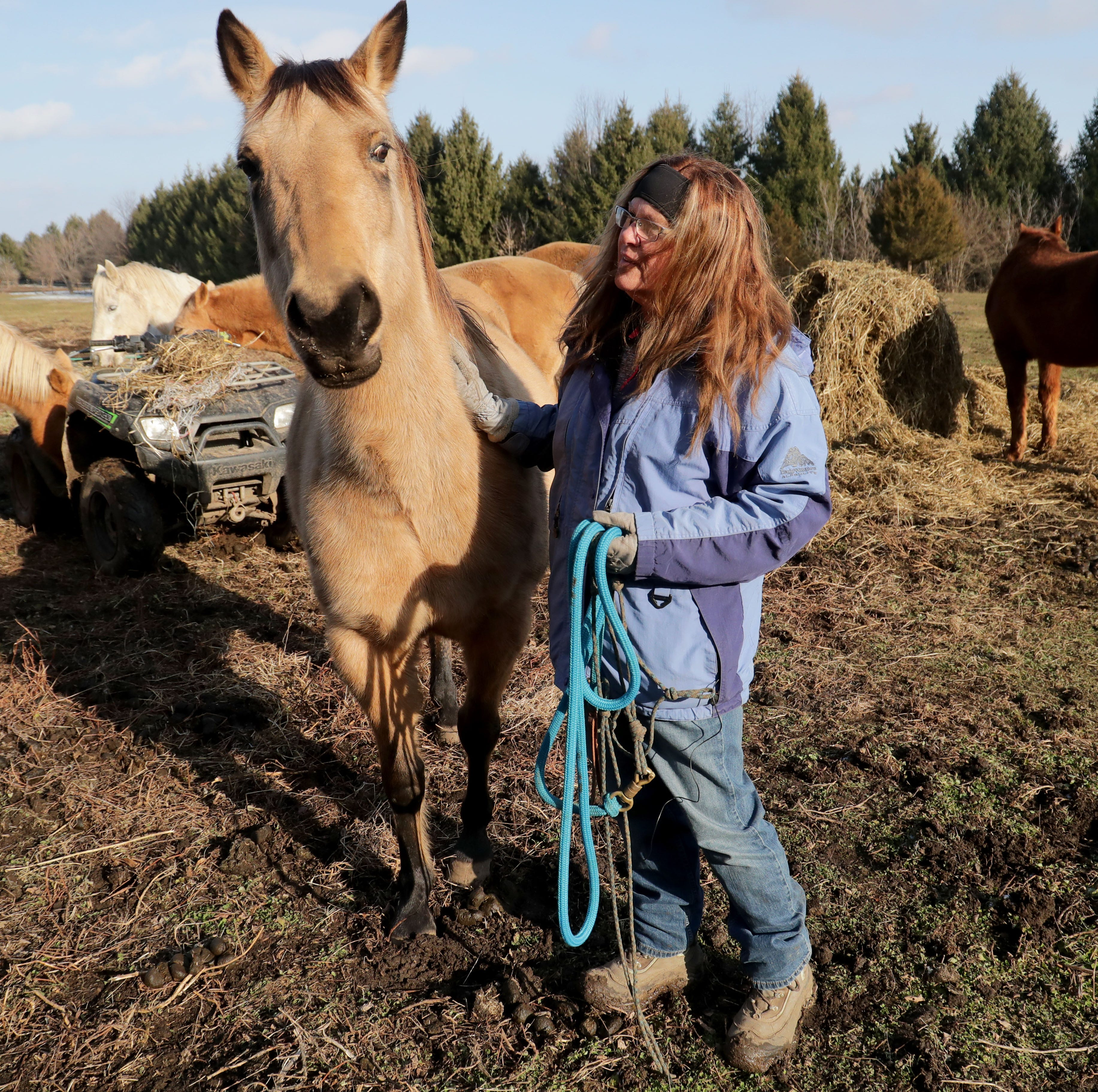 Equine rescue center urgently needs homes for unwanted horses, highlighting nationwide problem