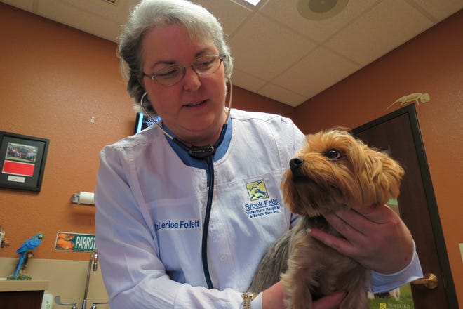 Dr. Denise Follett examines Jax the dog. She co-owns the Brook-Falls veterinary hospital, which makes an online video series of advice for pet owners.