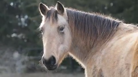 Spirit Horse Equine Rescue has to find homes for 23 horses as it faces  ordinance challenge
