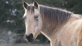 Spirit Horse Equine Rescue, in the Town of Janesville, has to find homes for 23 horses, soon, because it's over the limit for horses it can keep.