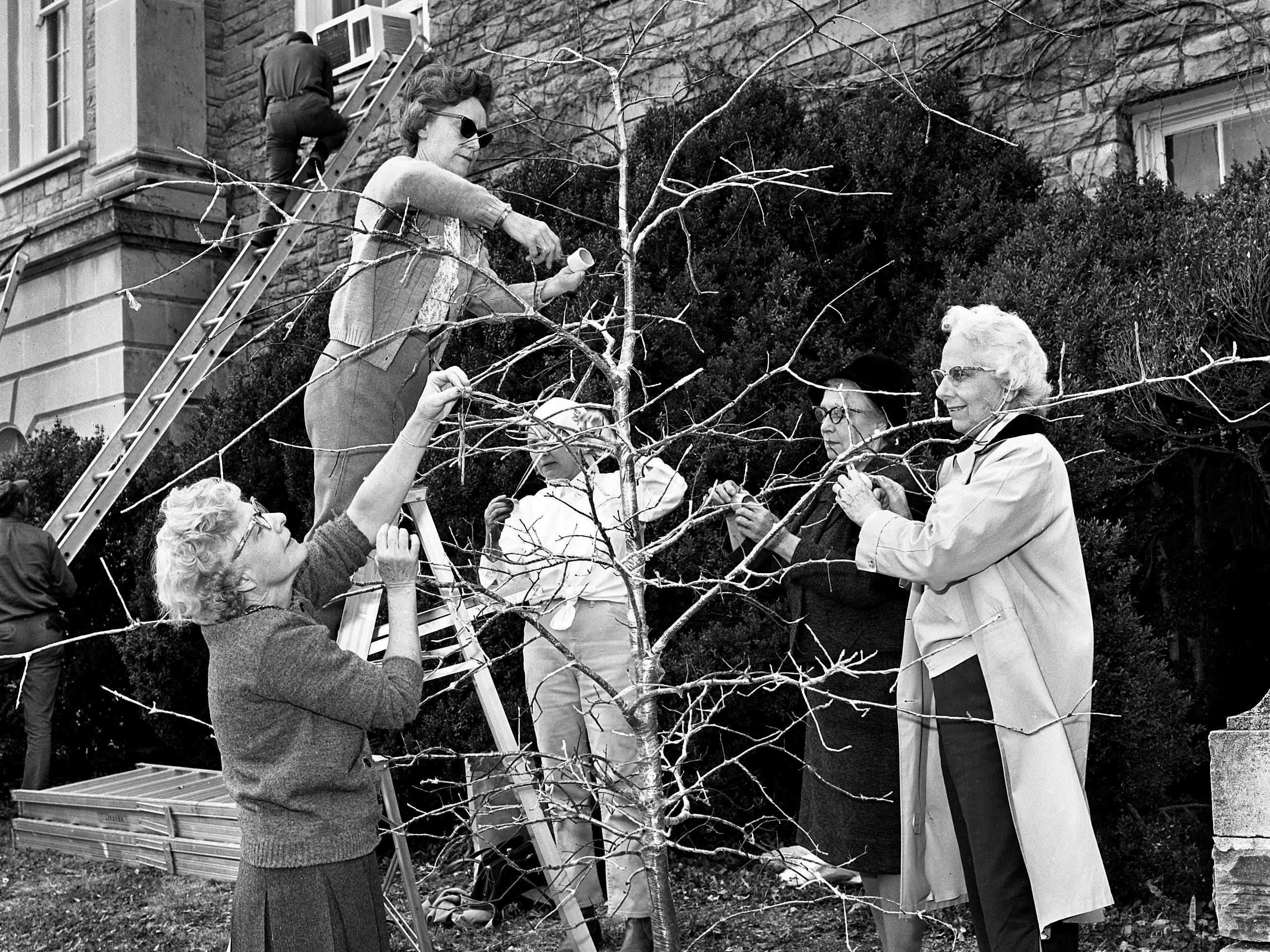 The Ice Tree decorated by members of the Hampton Gardens Club, is the first tree to catch the attention of those attending the upcoming 4th annual Christmas at Cheekwood event. Wrapping the pin oak with plastic Dec. 3, 1968 are Mrs. John W. Mason, left, Mrs. C.C. McDowell, Mrs. George Harsh Jr., Mrs. David Glenn and Mrs. Earl Certain.