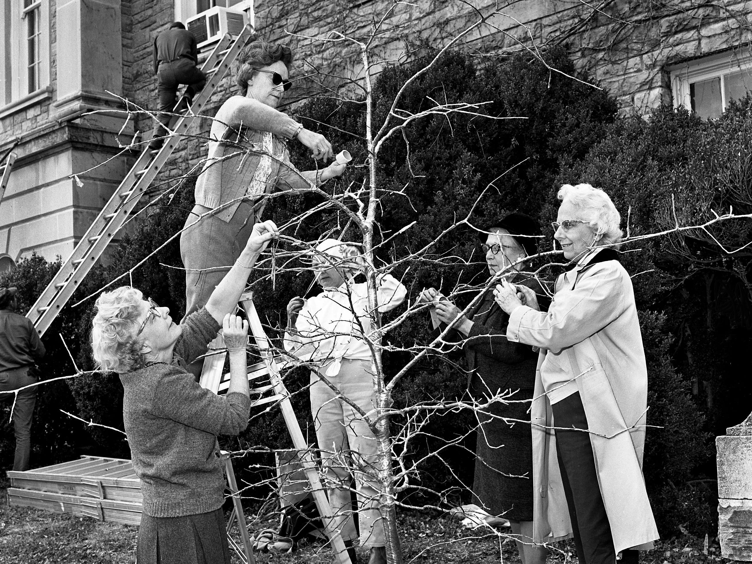 The Ice Tree, decorated by members of the Hampton Gardens Club, is the first tree to catch the attention of those attending the upcoming fourth annual Christmas at Cheekwood event. Wrapping the pin oak with plastic Dec. 3, 1968, are Mrs. John W. Mason, left, Mrs. C.C. McDowell, Mrs. George Harsh Jr., Mrs. David Glenn and Mrs. Earl Certain.