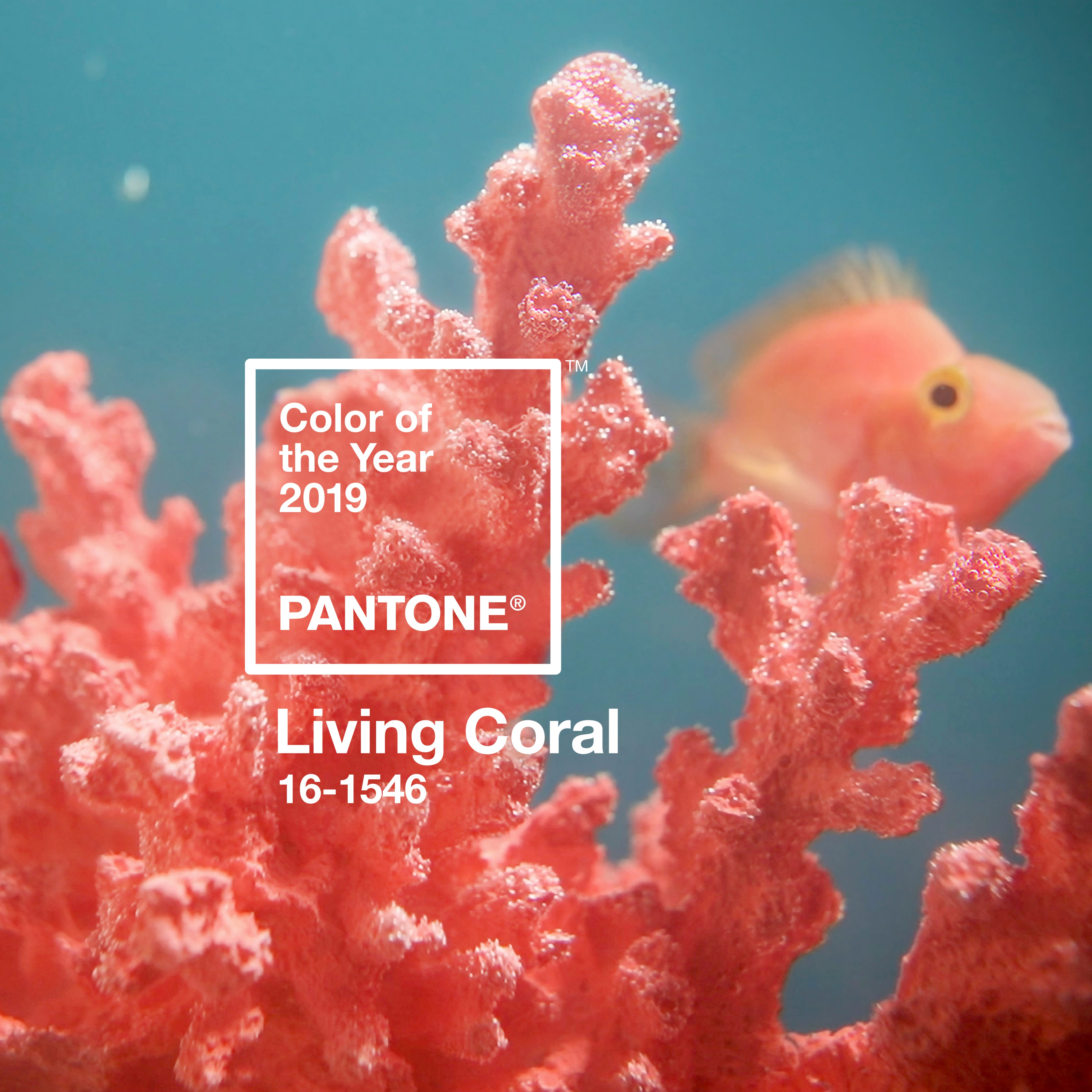Pantone's 'life-affirming' color of the year the same shade as rapidly dying coral reefs