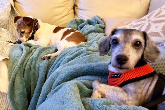 Deli begins to come out of his shell, hanging out with foster sibling Turbo.