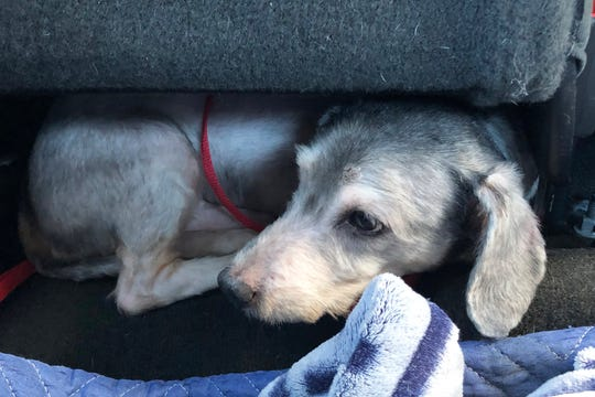 Deli, hiding under the car seat on the ride to his foster home, has made great progress since then.