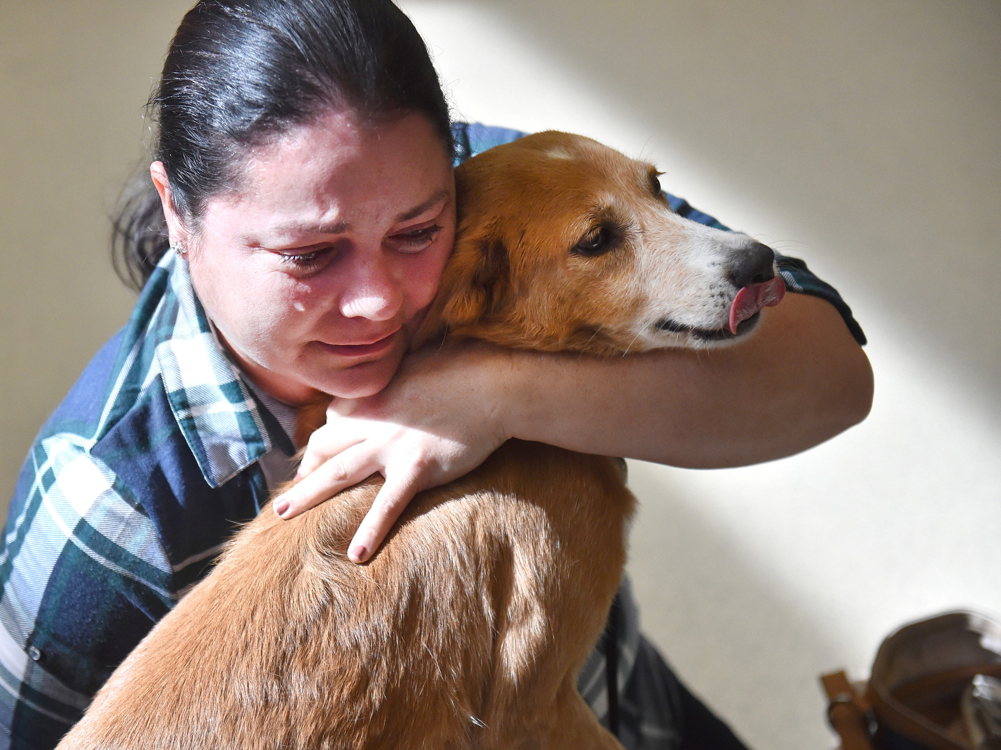 Sonaida Marrero, of Riverview, sheds tears of joy upon being reunited with her dog Susie at the HUmane Society of Vero Beach and Indian River County after being apart for several months. Thirty dogs from Puerto Rico are flown to Vero Beach Regional Airport on Sunday, Jan. 28, 2018, where they are received by the staff of Humane Society of Vero Beach and Indian River County. The dogs were then transported to the Humane Society in Vero Beach where they will later be reunited with their families, most of which evacuated Puerto Rico after Hurricane Maria hit in September 2017.
