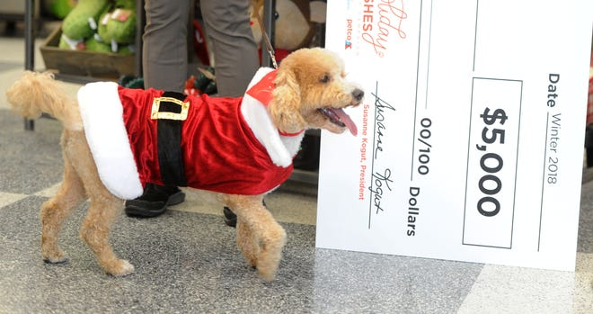 "Chenko was named after Ventura County sheriff's Deputy Yevhen ""Eugene"" Kostiuchenko who died in the line of duty. His widow, Maura Kelley, recently adopted the dog from the Camarillo-based nonprofit VIP Dog Teams, which received  a $5,000 grant as part of the Petco Foundation 2018 Holiday Wishes campaign."