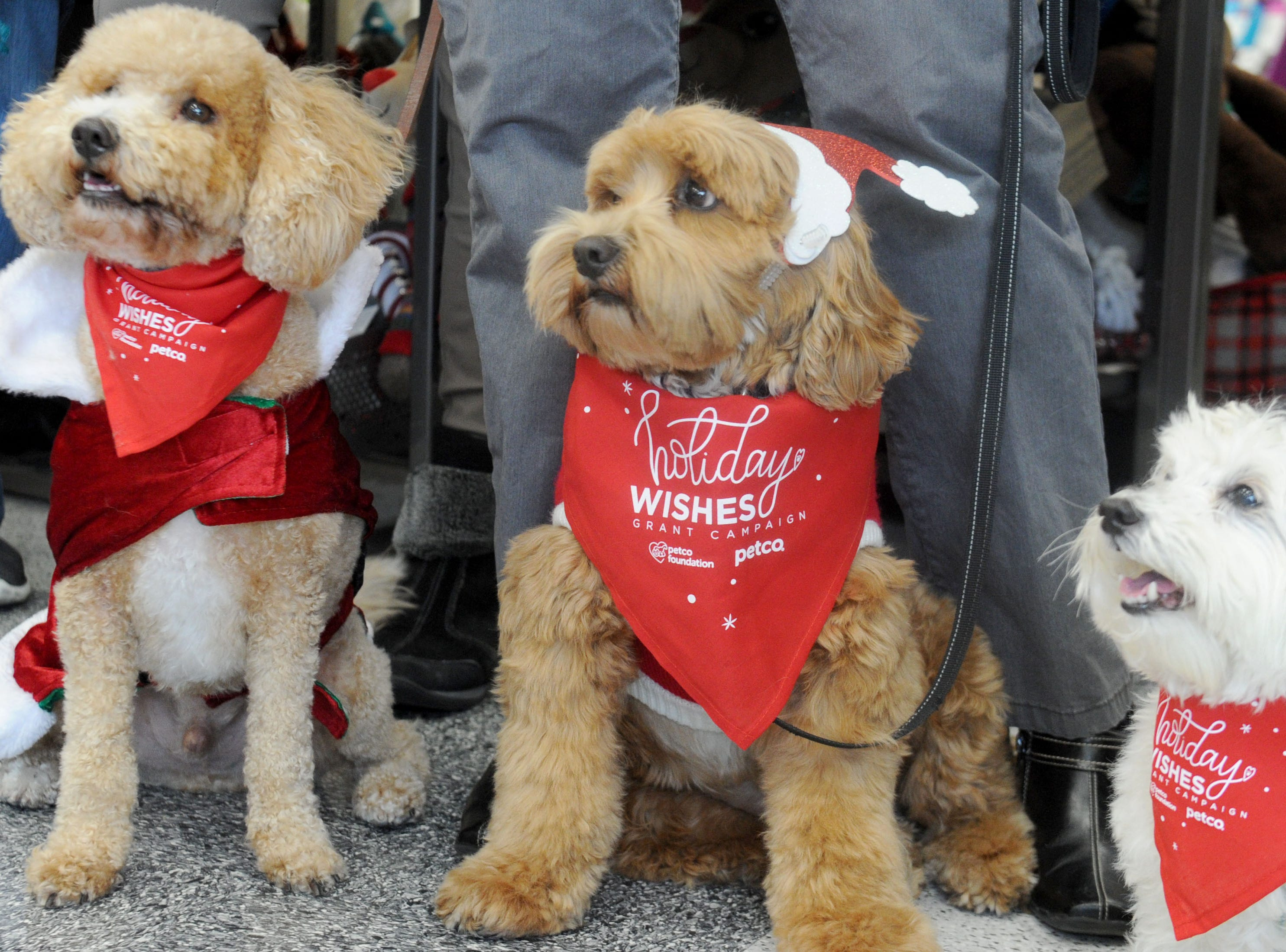 "From left, Chenko, Brady and Petey pose at the VIP Dog Teams event. Chenko  was named after Ventura County sheriff's Deputy Yevhen ""Eugene"" Kostiuchenko, who died in the line of duty. His widow, Maura Kelley, recently adopted the dog from the Camarillo-based nonprofit VIP Dog Teams, which received a $5,000 grant as part of the Petco Foundation 2018 Holiday Wishes campaign."