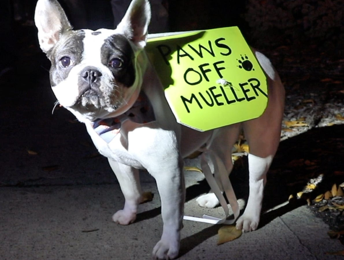 Piermont's Margret Grace's dog, Madeline joins in protest for the protection of Robert Mueller's investigation on Route 59 in Nanuet Nov. 8, 2018. In the wake of U.S. Attorney General Jeff Sessions being fired on Wednesday Local Residents gather to rally for the protection of Robert Mueller's investigation.