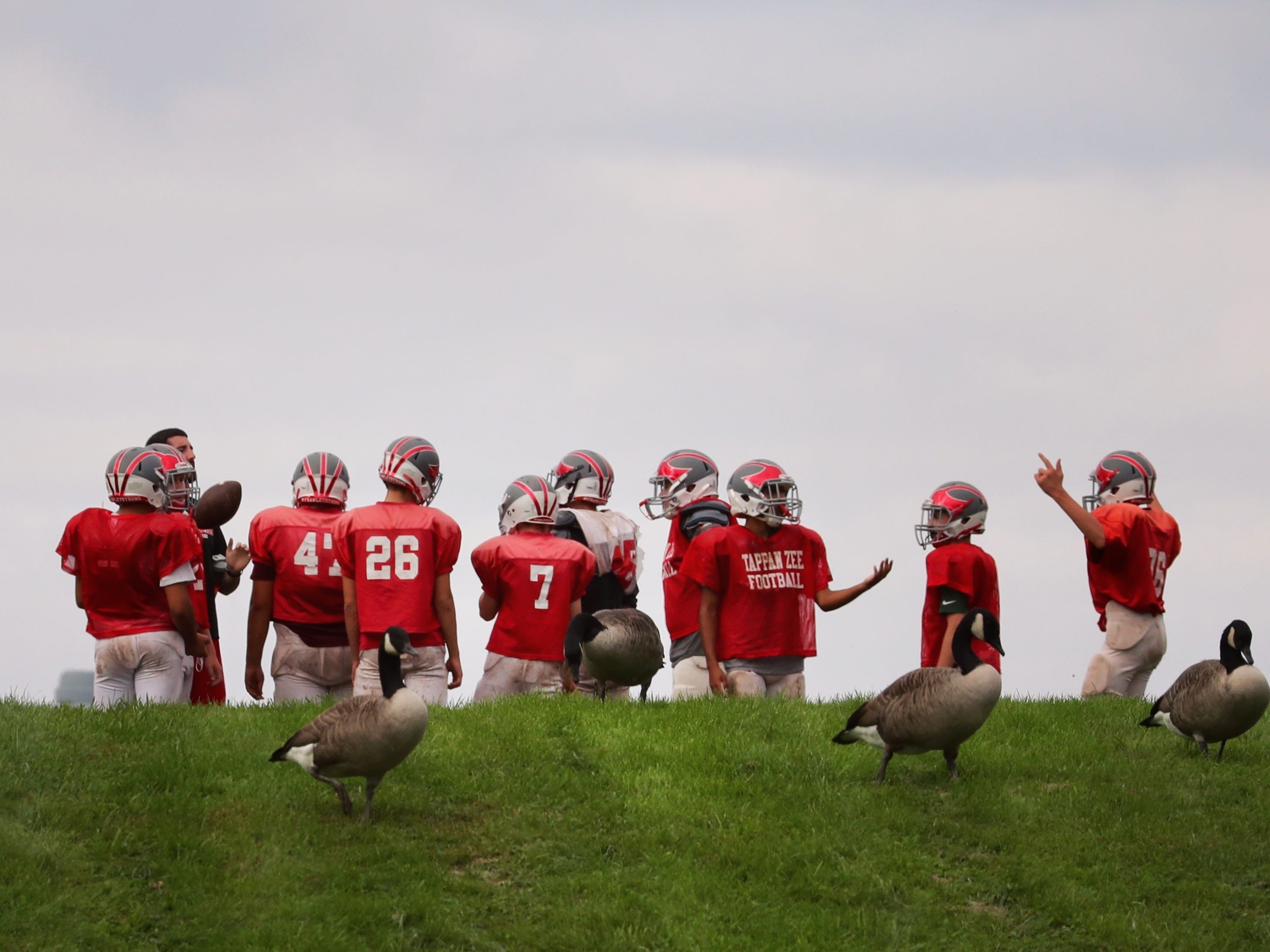 Canada geese make way for football practice at Tappan Zee High School