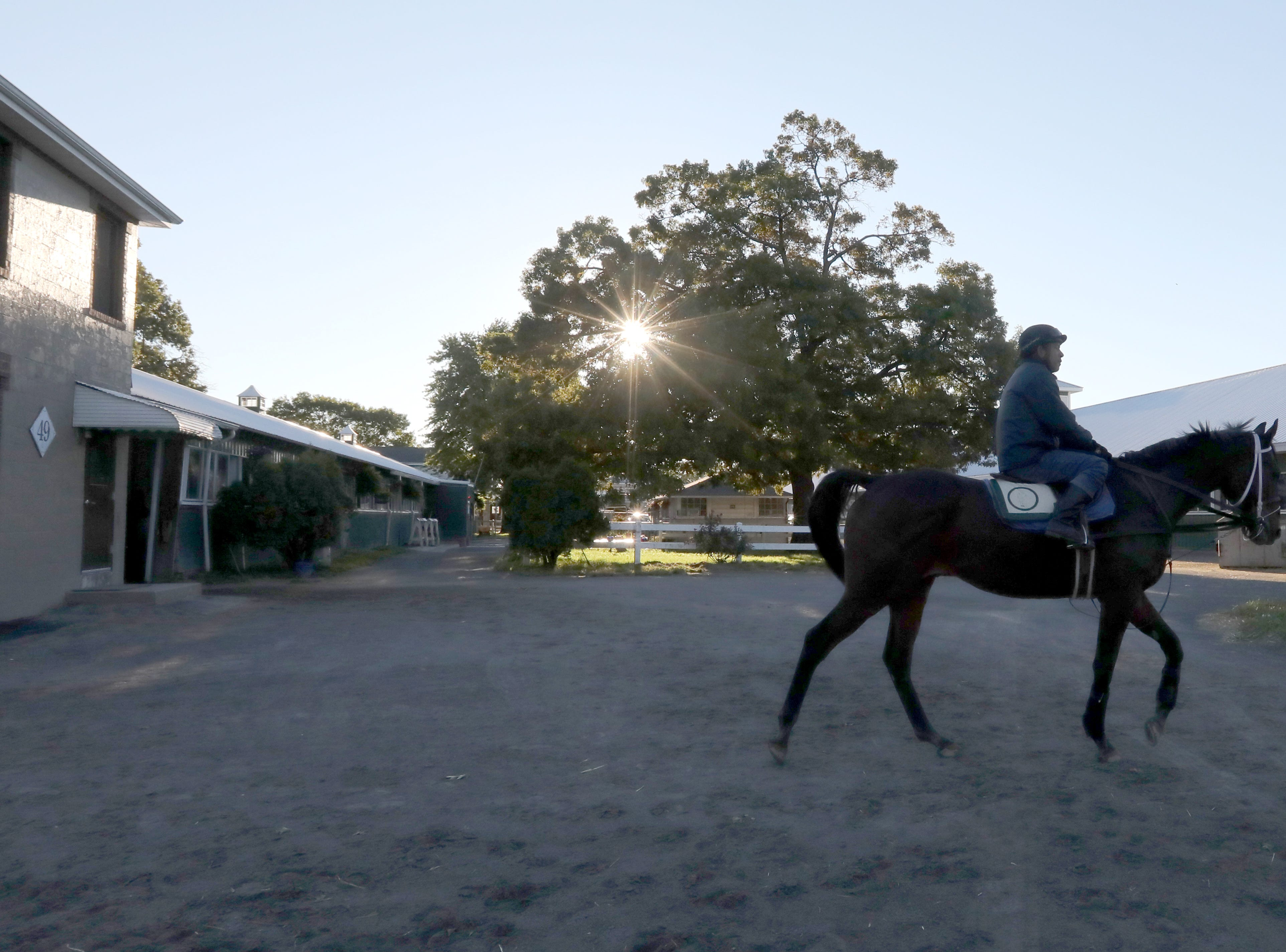 A rider heads out for a workout at Belmont Park in Queens Oct. 18, 2018.