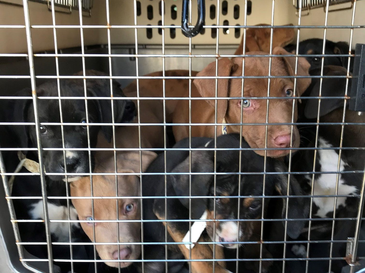 These dogs will be available at the Brandywine Valley SPCA's 2018 Mega Adoption Event at the Delaware State Fairgrounds in Harrington this weekend.