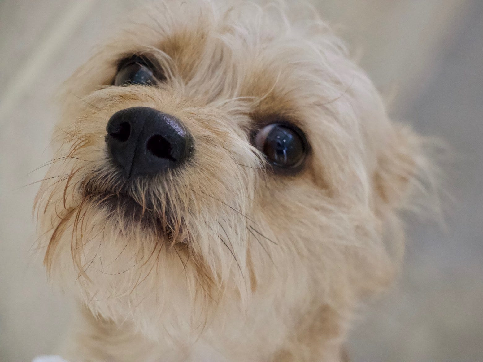 This dog will be available at the Brandywine Valley SPCA's 2018 Mega Adoption Event at the Delaware State Fairgrounds in Harrington this weekend.