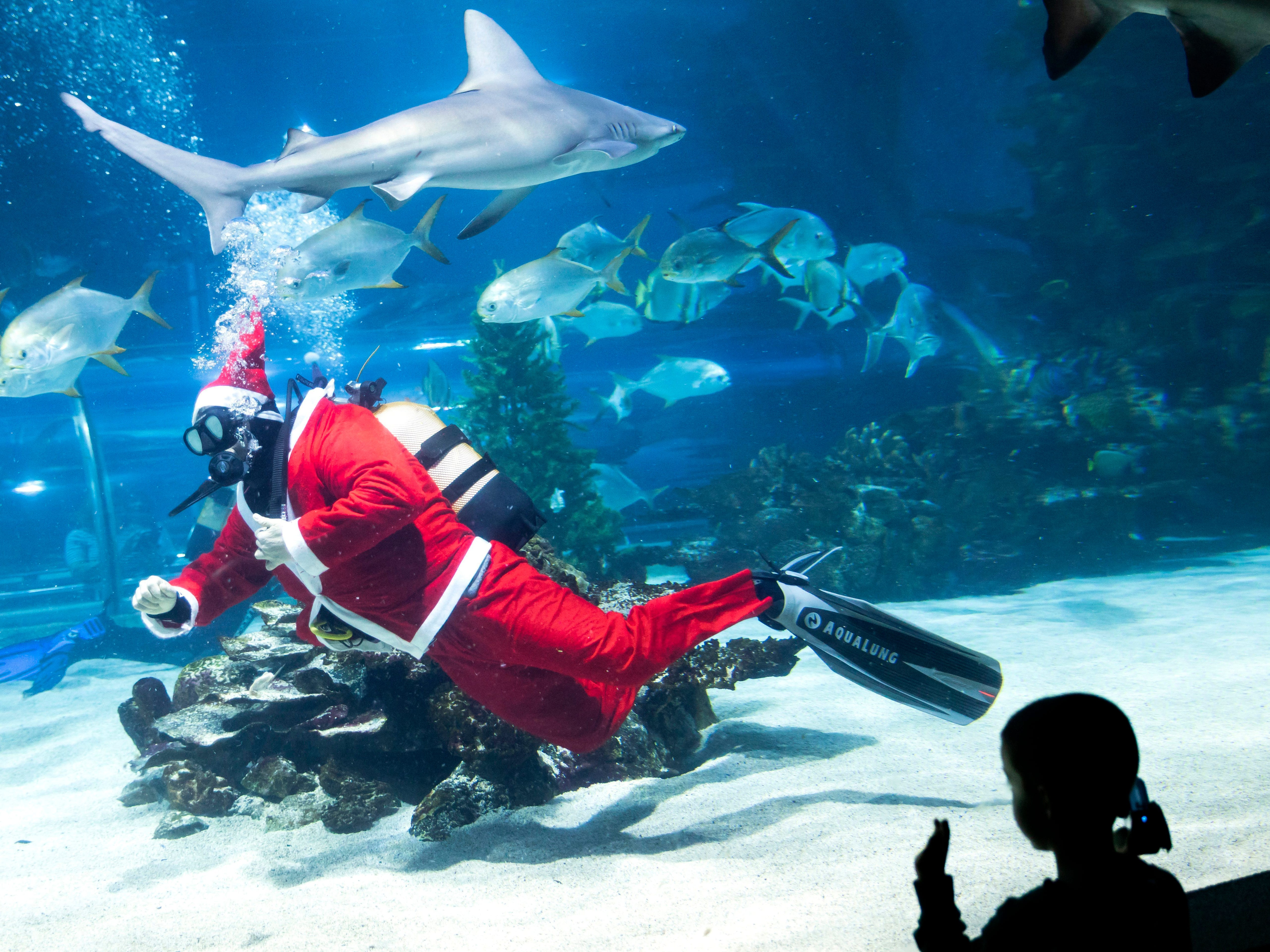 A scuba diver decorates a Christmas tree with seashells in a fish tank of the Tropicarium in Budapest, Hungary, Dec 6, 2018. The diving Santa is part of a show to celebrate the Christmas season and promote the aquarium to increase the number of visitors.