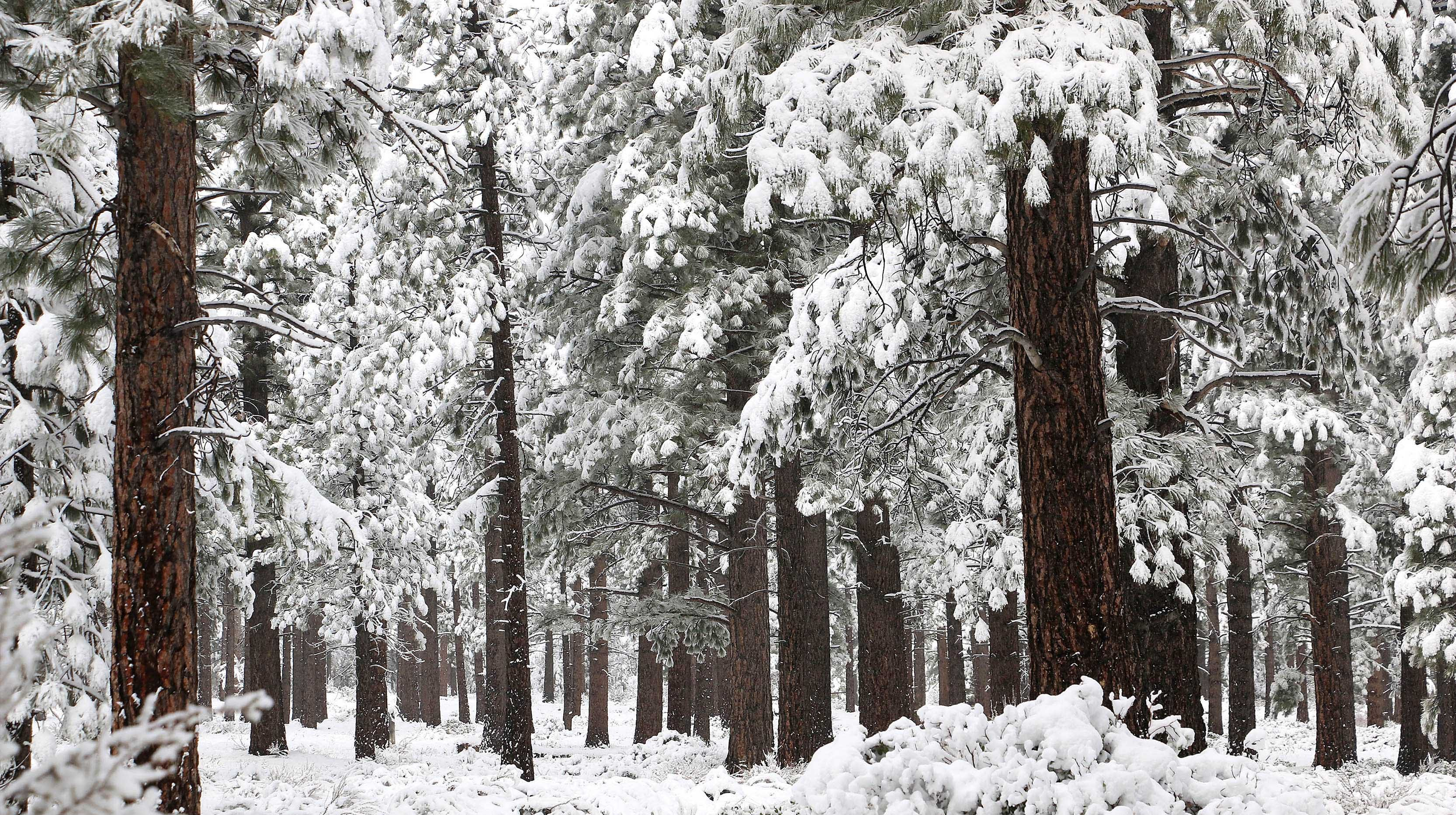 Snow has already made a landing this season. Some light, some heavy, but all fun to look at and admire. Enjoy this gallery of a winter wonderland, like this photo of fresh snow seen along the Mt. Rose Highway near Reno, N.V. on Nov. 29, 2018.