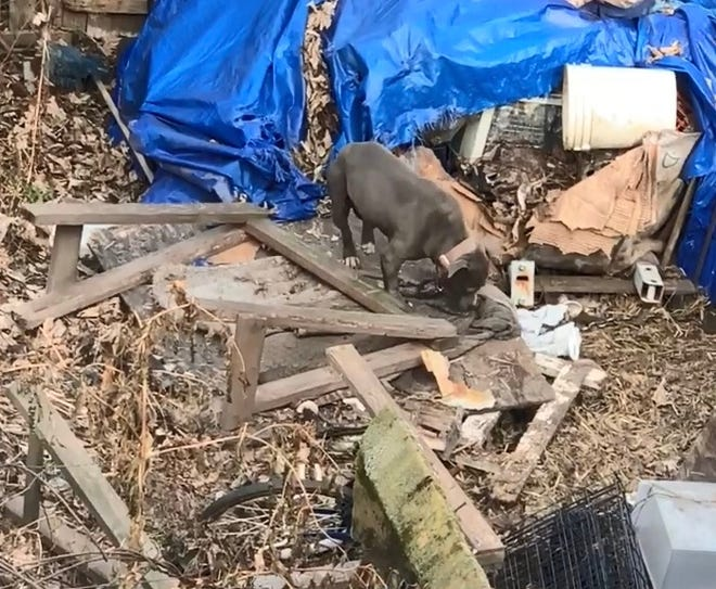 """Plainfield Residents' Association for Animal Rescue is disputing police reports that a neglected dog is in """"satisfactory"""" condition."""
