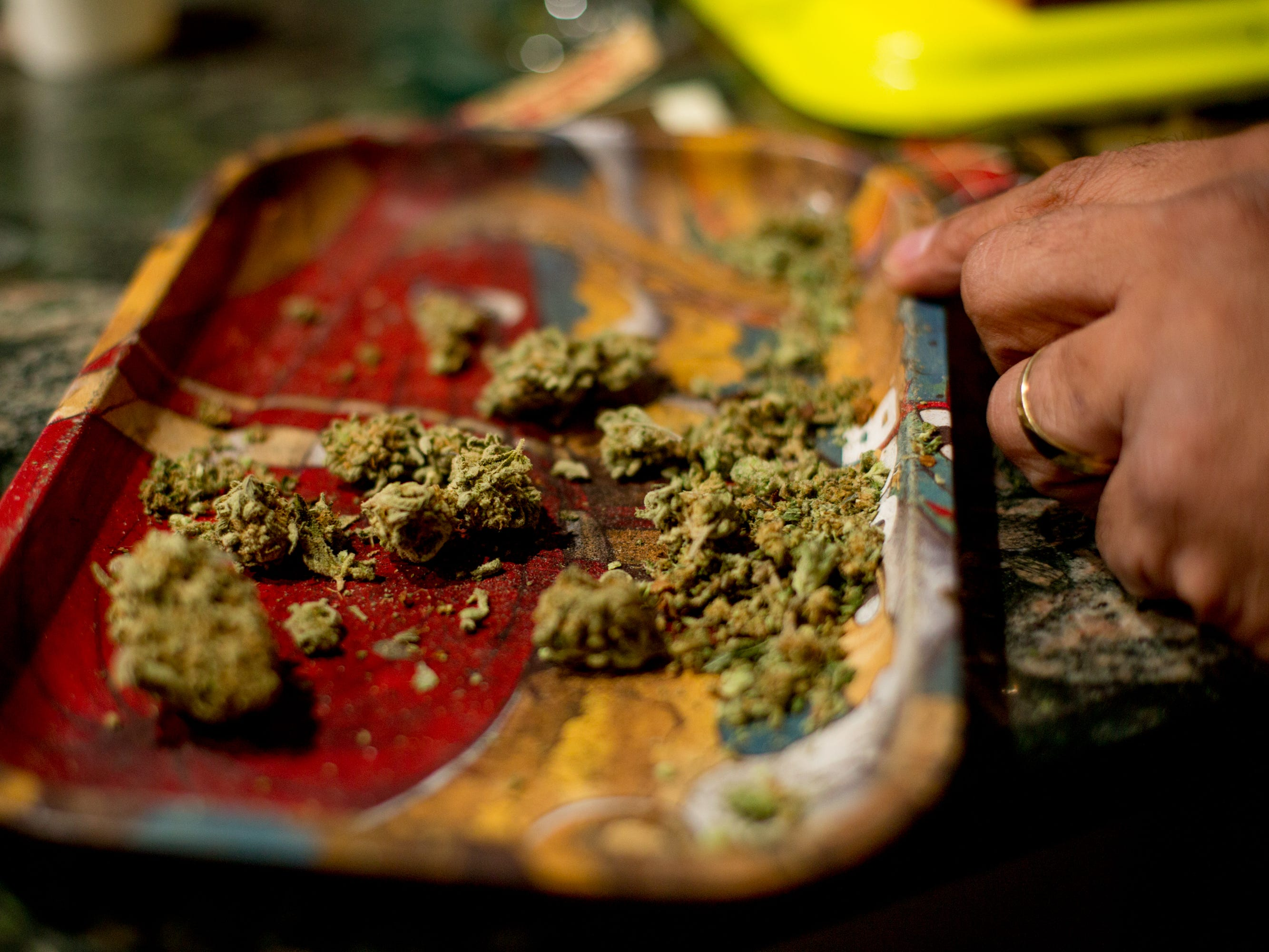 Cannabis is spread out on a rolling tray.
