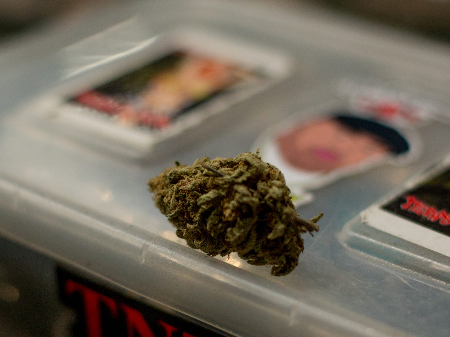A bud rests on a storage box at the party.