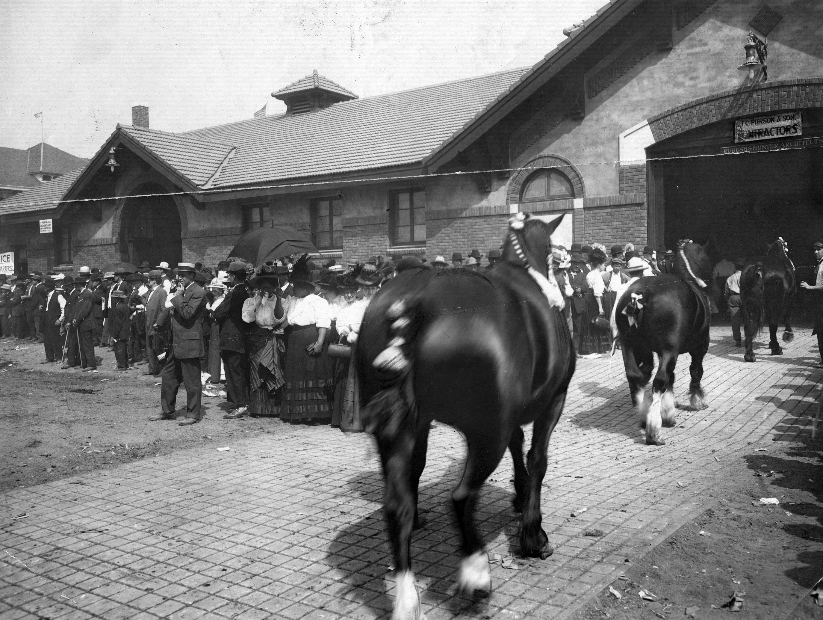 Ribbon winners head back to the barn at the 1917 Indiana State Fair.
