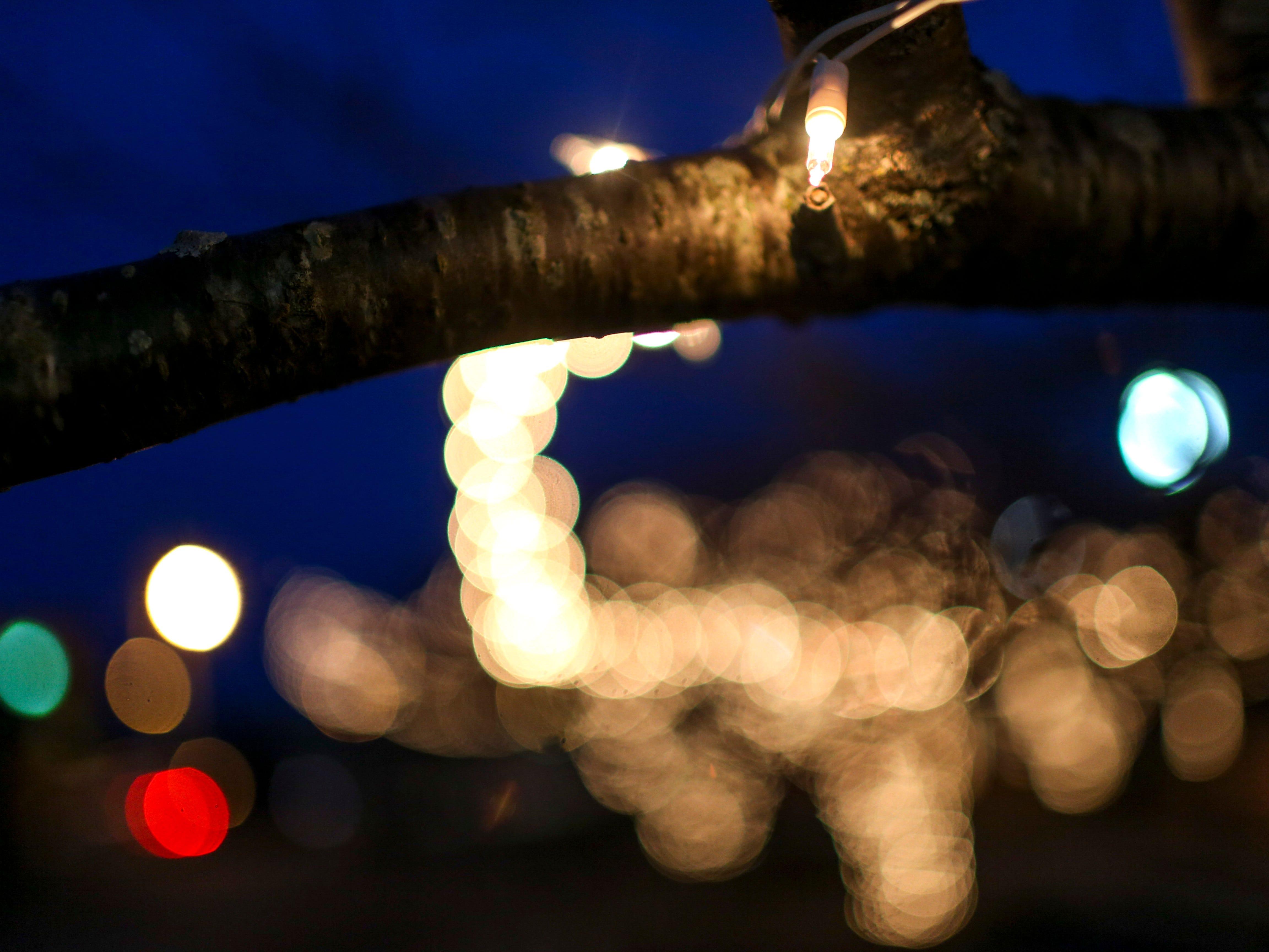 Festive holiday lights adorn the trees during the first public Chanukah Menorah Lighting at Anderson Park in Jackson, Tenn., on Thursday, Dec. 6, 2018.