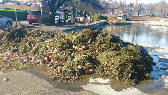 Crews removed three truckloads of aquatic grasses from Fountain City Lake. The non-native species appear to have been dumped from private aquariums.