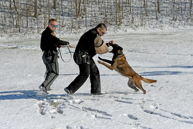 Mansfield police officer Korey Kaufman takes a hit from Nero, handled by Deputy Ryan Kelly of the Marion County Sheriff's Department, during a demonstration after Kelly and his dog Nero graduated during a ceremony Friday.