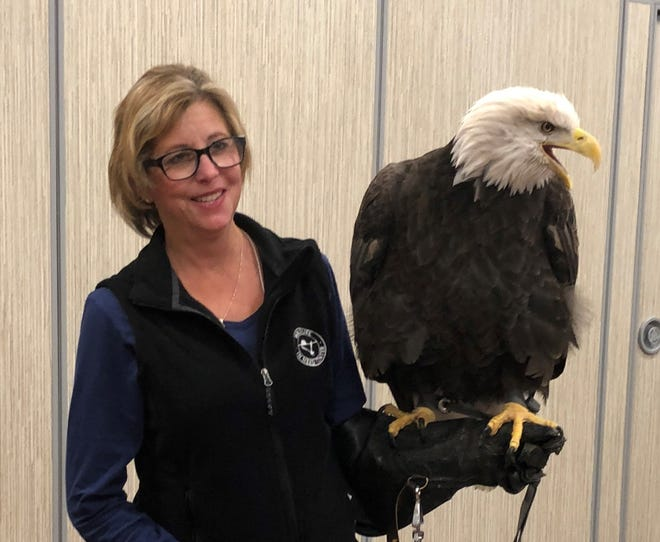Kim Banach, president of the board of directors for the Wildlife in Need Center in the town of Ottawa, got up close and personal with Maxim, American bald eagle education ambassador at the University of Minnesota Raptor Center Oct. 12. Banach was there to attend the center's annual conference on the care and management of raptors in captivity.