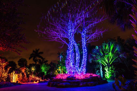 Naples Botanical Garden lit up last year during the annual Night Lights . This year, the event kicked off Dec. 7. Garden staff said spectators can expect to see more multi-colored lights and musical performances.