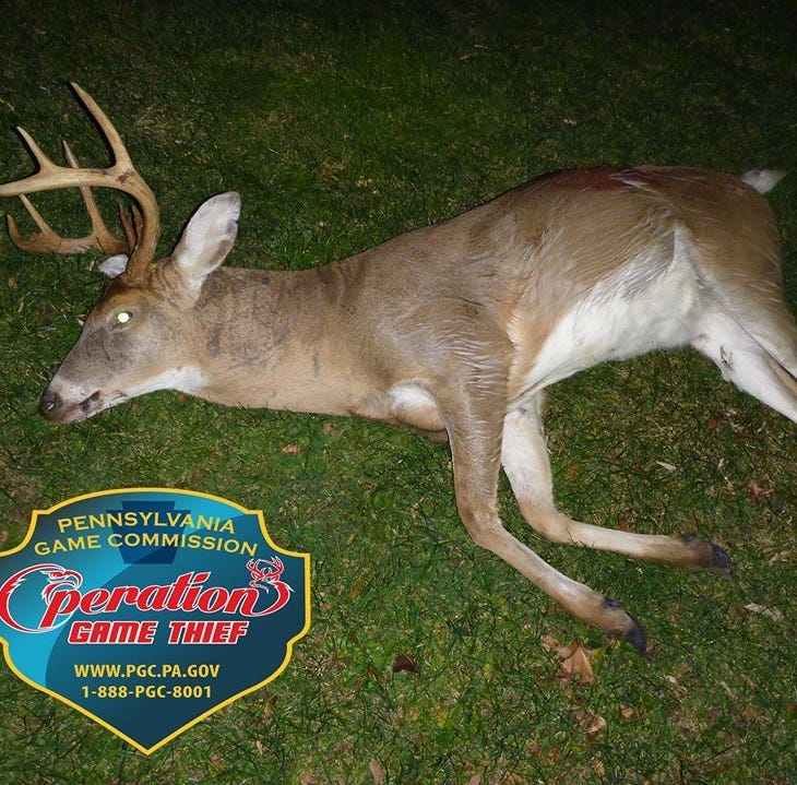 Pennsylvania Game Commission reports eight-point buck killed illegally in York County