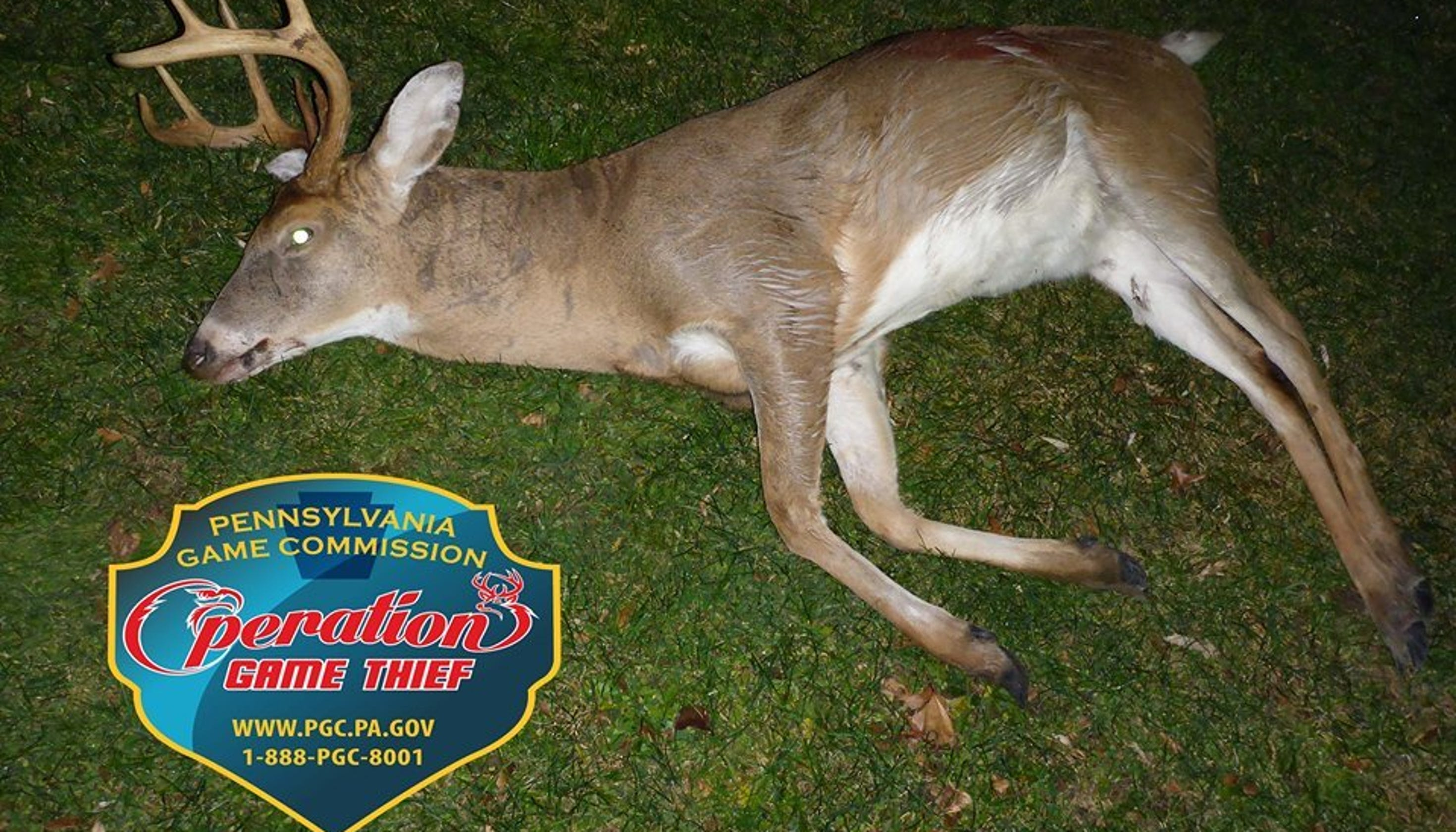 Pa  Game Commission says 8-point buck killed illegally in
