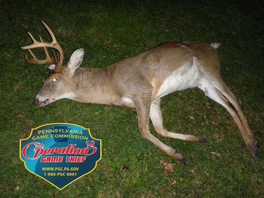 Buck Killed Illegally