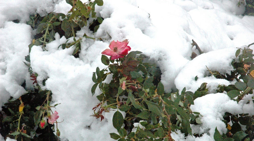 Winterizing your landscape can keep the yard looking fresh while waiting for spring.