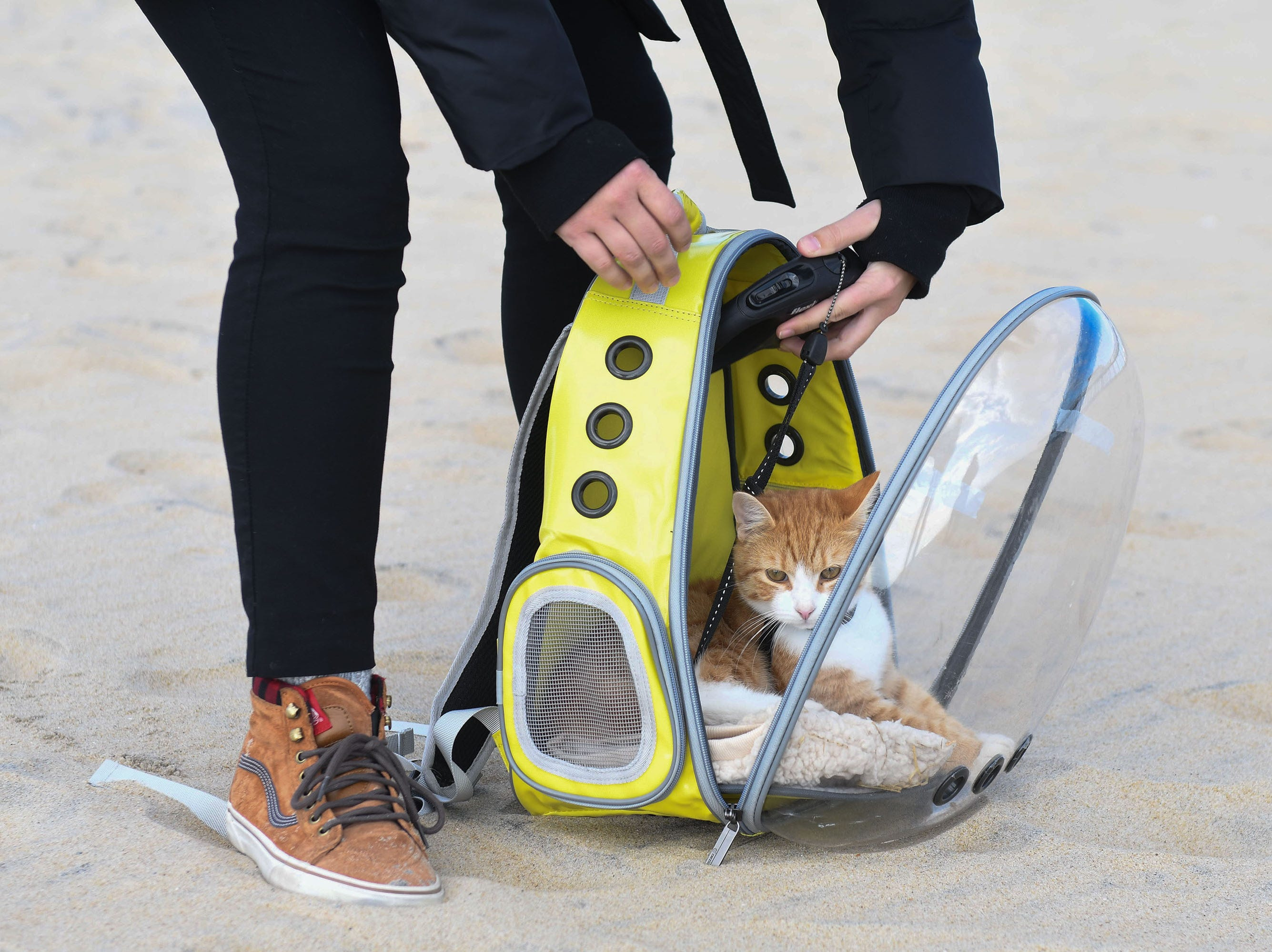 Pip the Beach Cat rides in his cat bubble to the beach to play.