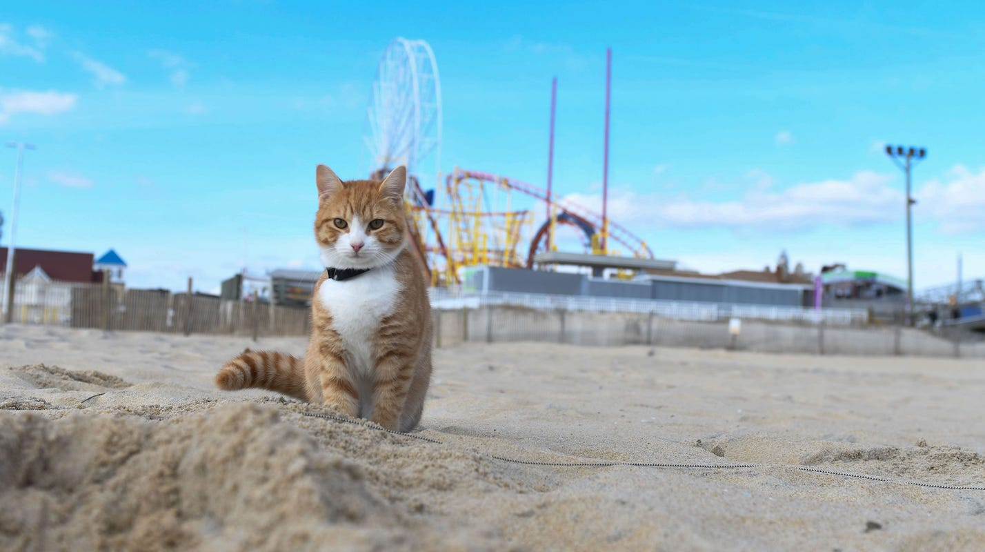 Pip The Beach Cat Makes Waves