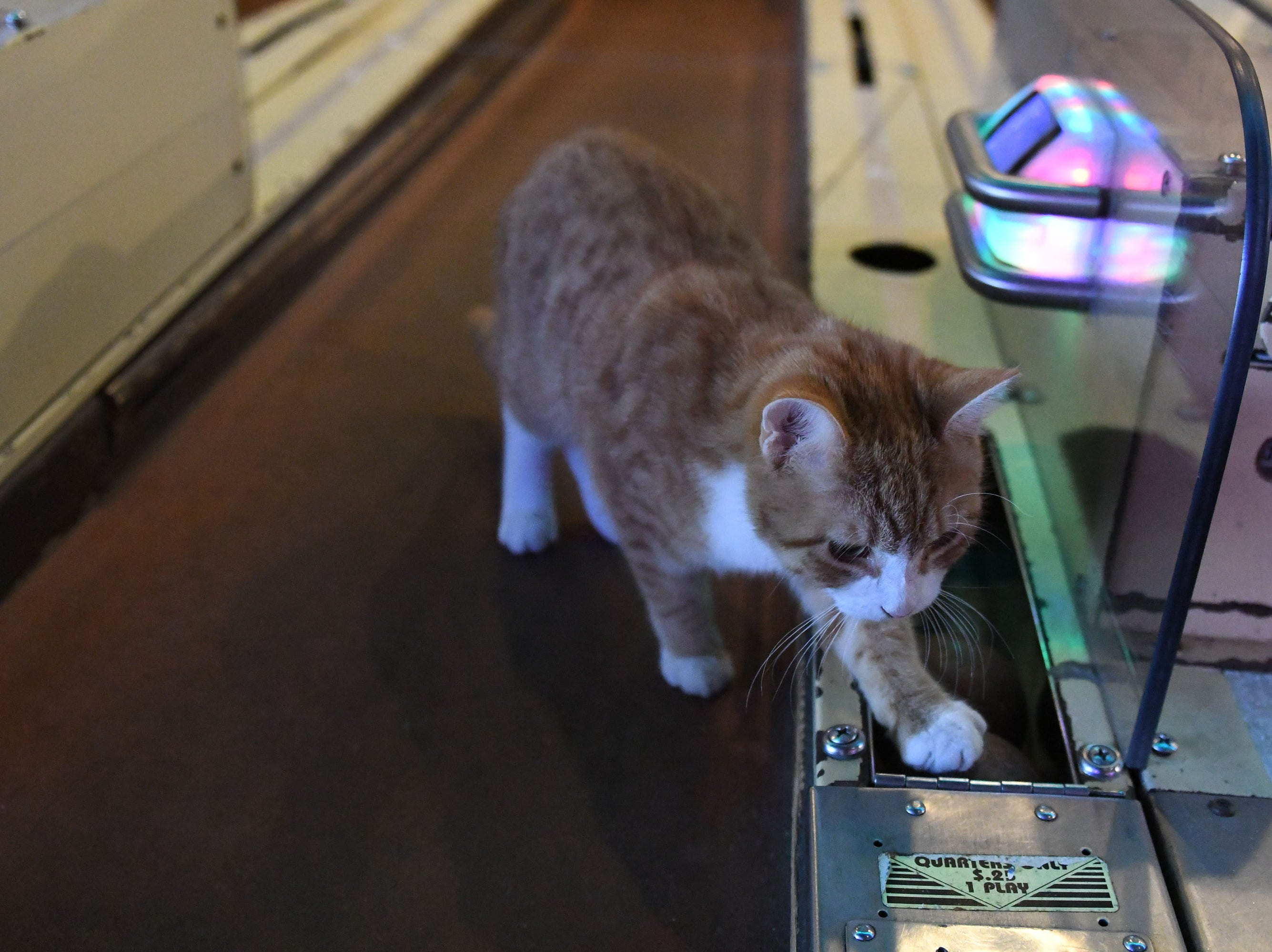 Pip the beach cat plays skee ball on Thursday, Dec. 6, 2018 at Playland in Ocean City.