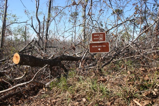 A nature trail is impassable due to downed trees at Torreya State Park which reopened on Friday, Dec. 7, 2018, almost two months after Hurricane Michael hit the panhandle.
