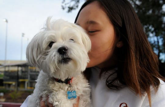 Oaks Christian's Charissa Shang gives a kiss to her dog Alfee. The freshman is The Star's Girls Golfer of the Year.